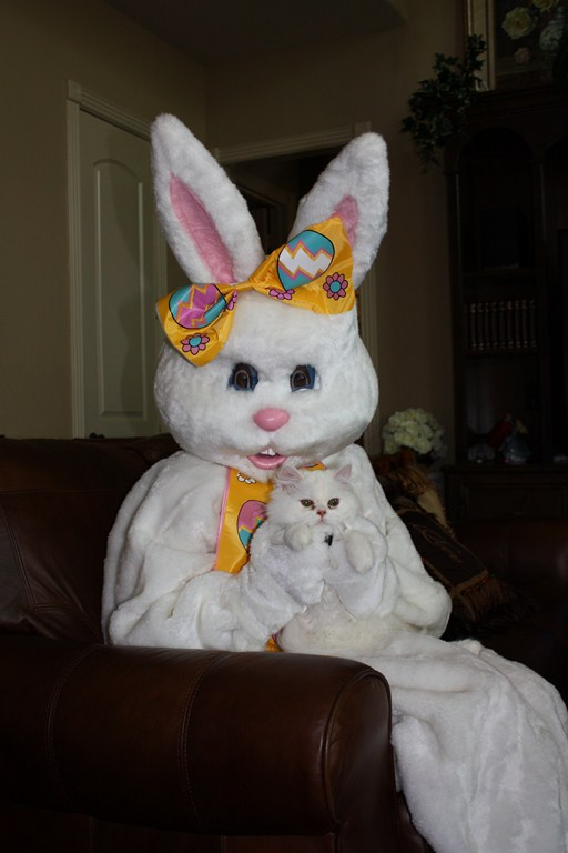 sugar and the easter bunny
